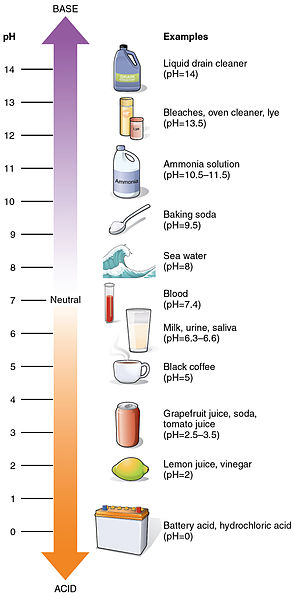 pH Scale Illustration With Examples