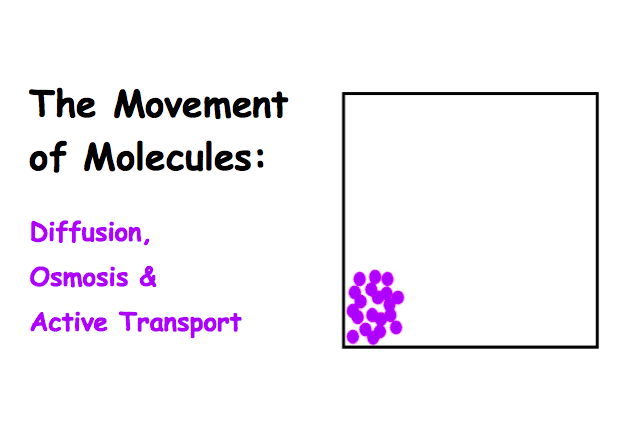 Diffusion, Osmosis & Active Transport Lecture Main Page
