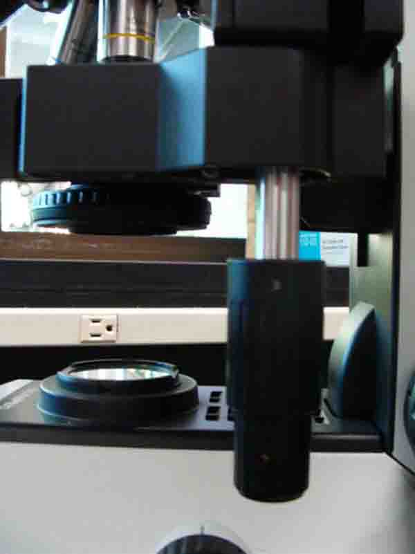 compound light microscope parts images  photographs from