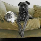 Dog and Cat Resting on Couch
