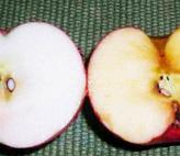 Apple on left was swabbed with lemon juice. Apple on right was not. Note accumulation of brown polyphenol.