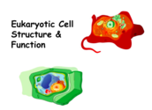 Eukaryotic Cell Structure & Function Lecture Main Page