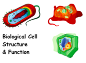 Biological Cells Structure & Function Lecture Main Page