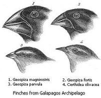 News Articles About Theory of Evolution Darwin