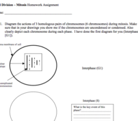 Mitosis Homework Assignment