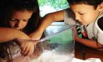 Kids taking planaria out of their tank so it can be cleaned.