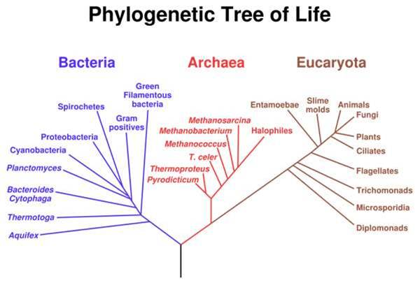 Prokaryotic And Eukaryotic Two Basic Types Of Biological Cells