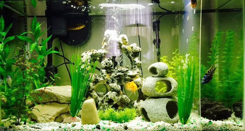 African Cichlid Aquarium Set Up Care