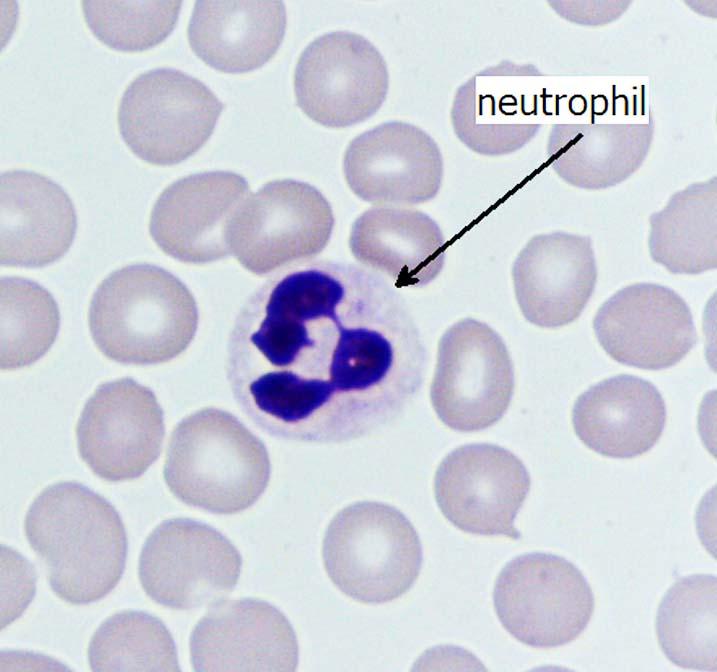 Prokaryotic Eukaryotic Biological Cell Images Photos