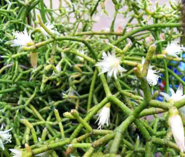 Free Cactus & Succulent Plant Images & Photographs From